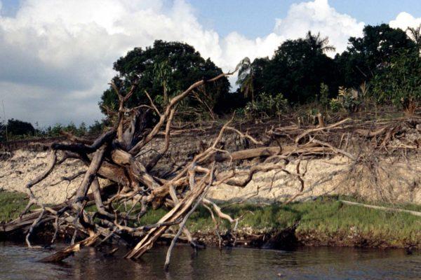 Dopo le accuse di Bolsonaro a Ong e Di Caprio di aver dato fuoco alla foresta dell'Amazzonia, un audio li scagiona